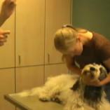 dog-inject