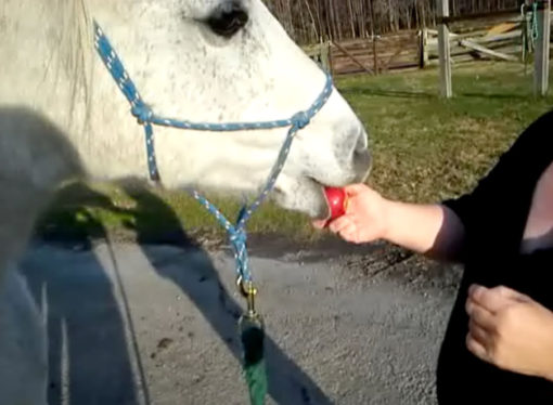 kayce-n-horse